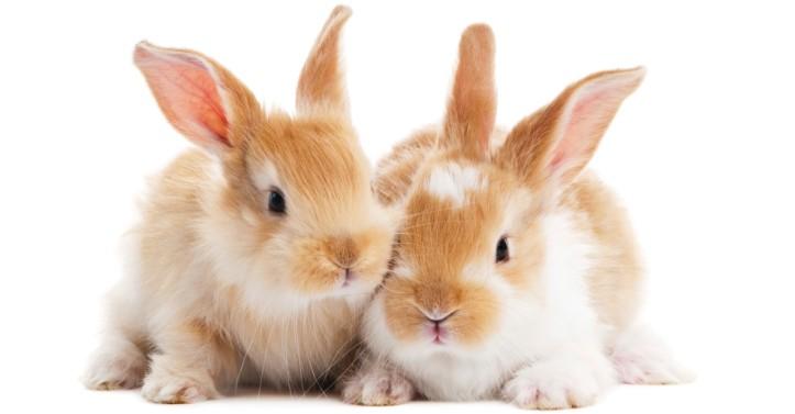 bunniesjpg